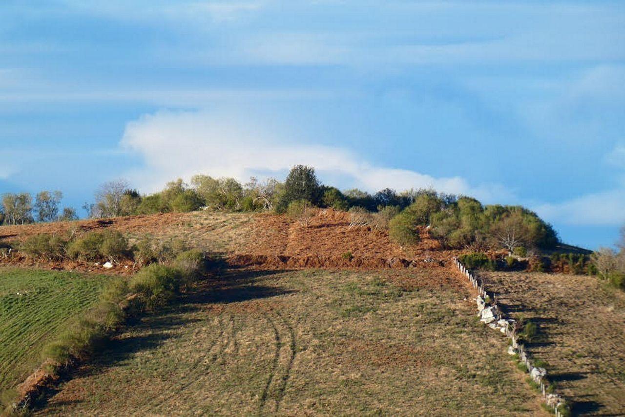 Castro descubierto en Pedrafita. Foto: Patrimonio dos Ancares