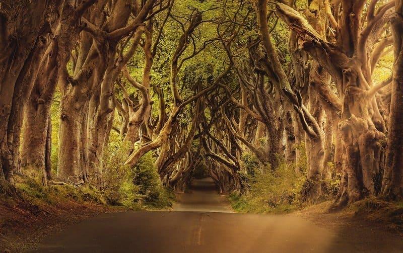 Dark Hedges, el bosque irlandés de Juego de Tronos